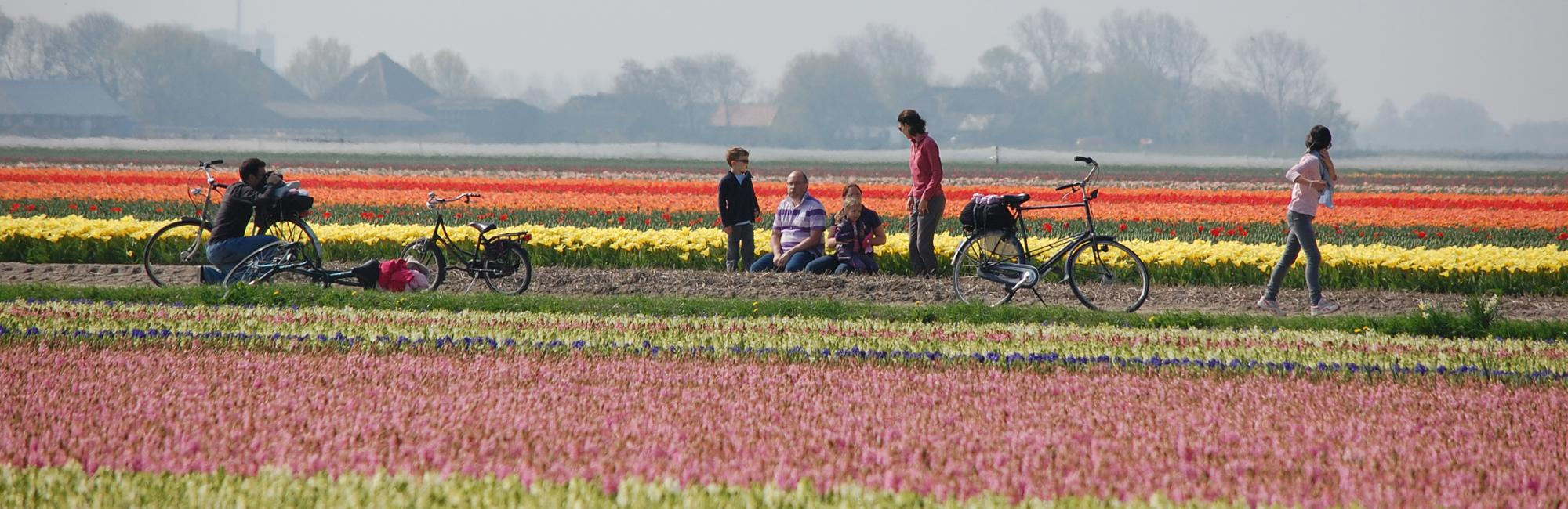 Dutch Bike Tours Cycling holiday Tulip Tour