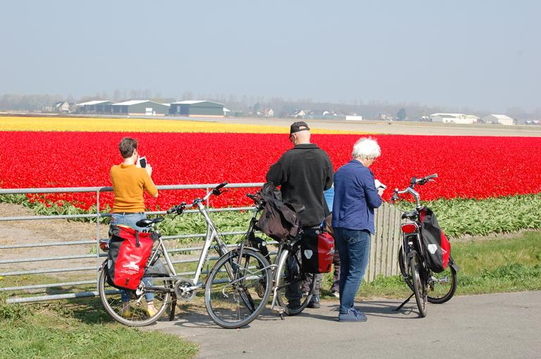 Cyclists red tulips