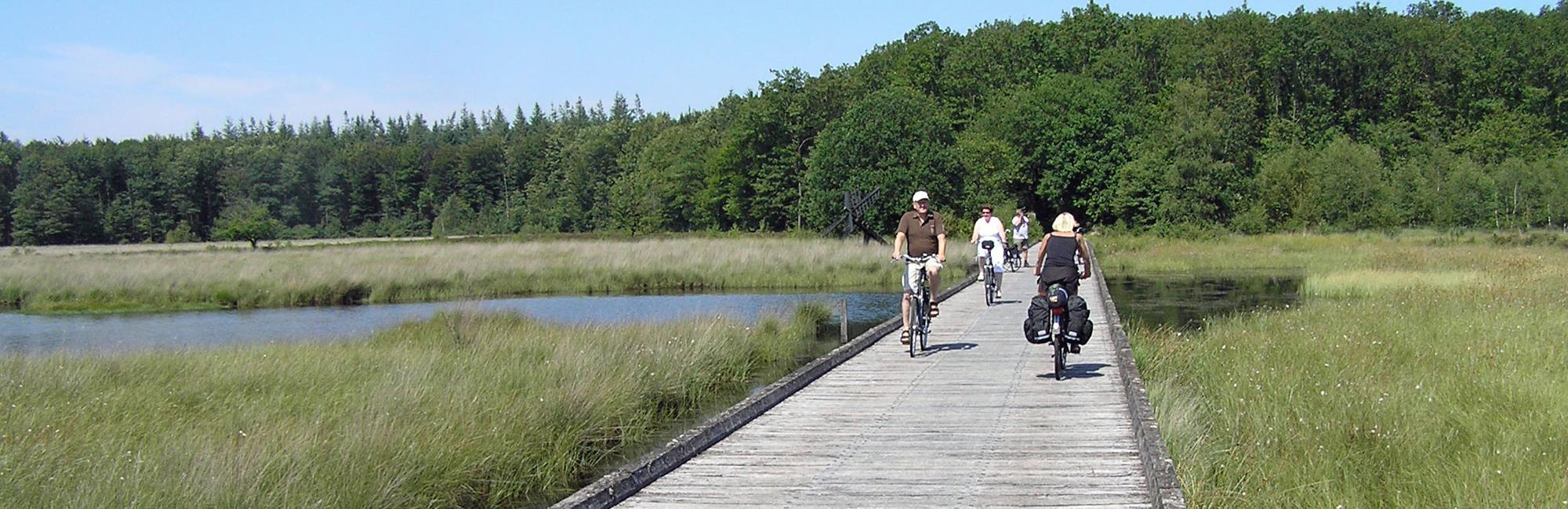 Dutch Bike Tours Cycling holiday The Heathlands of Drenthe tour